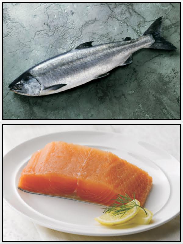 Salmone Keta Alaska Seafood