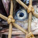 Gestión de pesquerías Alaska seafood