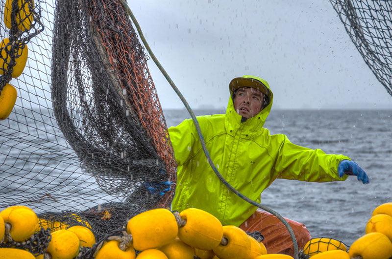 Pescador de Alaska en acción