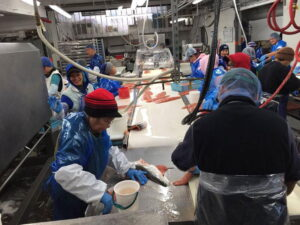 Fabrica de procesamiento del salmón