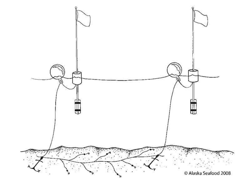 Pesca con Palangre