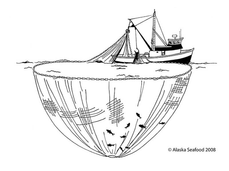 Pesca de Cerco con Jarreta